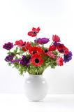 Red Anemone coronaria in a white vase Royalty Free Stock Images