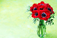 Red Anemone flowers bouquet in a glass vase Bright green background Copy space Royalty Free Stock Photo