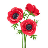 Red anemone flowers. Vector illustration. Vector illustration of red anemone flowers with stems on a white background Stock Photo