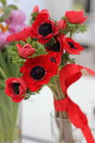 Red anemones Royalty Free Stock Image