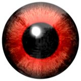 Red animal frog eyeball royalty free illustration