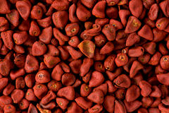 Red Annatto Seeds (Bixa orellana) Stock Image