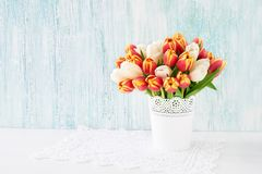 Red ans white tulips bouquet in white vase on blue background. H. Oliday background, copy space. Valentine Day, Mothers day, birthday concept Royalty Free Stock Image