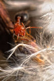 Red Ant. An ant in his natural habitat Royalty Free Stock Photos