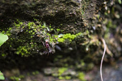 A red ant in cave. A red ant in moist cave which is covered with moss stock images