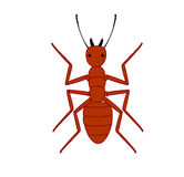 Red Ant. Creepy Weird Red Ant Vector Illustration Stock Images