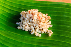 Red ant eggs. On banana leaf stock photo stock photos