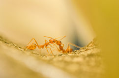 Red ant in green nature Stock Image