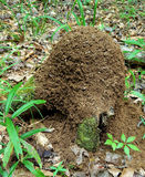 Red Ant Hill Stock Image