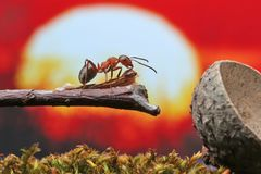 Ant sits on a dry branch. Royalty Free Stock Photos