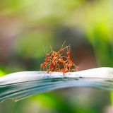 Red ant teamwork in green nature Stock Photo