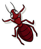 A red ant. On a white background Royalty Free Stock Photos