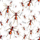 Red ants Stock Photos