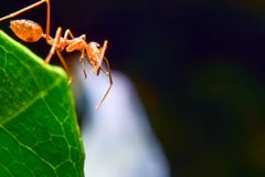 Red ants. Are on flowers royalty free stock photos