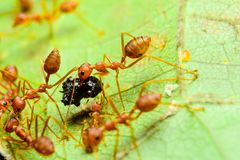 Red ants. Are on flowers royalty free stock photography