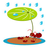 Red ants protect illustration Stock Photo