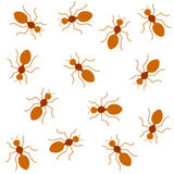 Red ants Seamless background Stock Images