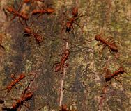 Red ants team work and discussion Royalty Free Stock Images