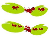 Red ants teamwork illustration Royalty Free Stock Photo