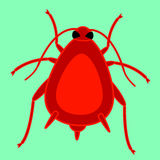 Red aphid insect Royalty Free Stock Images