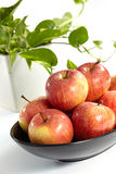 Red apple royalty free stock photo