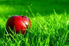 Red Apple. On the Lawn Stock Images