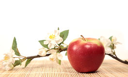 Red apple. And branch of apple-trees Royalty Free Stock Image