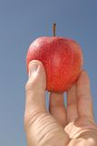 Red Apple. Hand holds apple Stock Photos