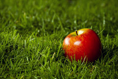 Red apple. Red apple laying on the grass Royalty Free Stock Photography