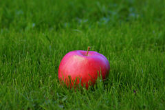 Red apple. On the grass Royalty Free Stock Photos