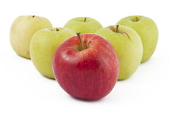 Red apple ahead of the many green on white. Red apple ahead of the many green apples on white background Royalty Free Stock Photo