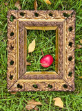 Red  apple in antique picture frame on autumn grass Stock Image
