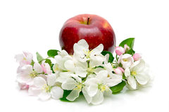 Red apple and apple flowers on a white background Stock Photo