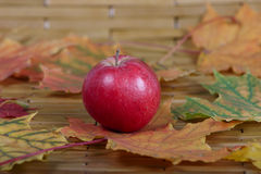 Red apple among autumn leaves Royalty Free Stock Photos