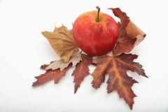 Red apple on autumn leaves royalty free stock photography