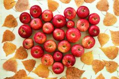 Red apple on the background of yellow dry autumn leaves, top view. Royalty Free Stock Images