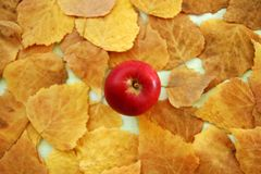 Red apple on the background of yellow dry autumn leaves, top view. Royalty Free Stock Photography