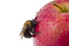 Red apple and bee Stock Image