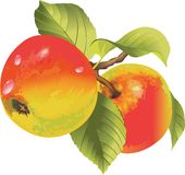Red apple big. Red, ripe apple with leaves, vector illustration Royalty Free Stock Photo