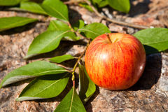 Red apple on big stone Royalty Free Stock Image