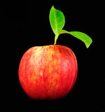 Red apple on black Stock Photography