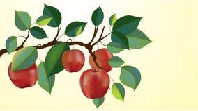 Red apple branch stock illustration