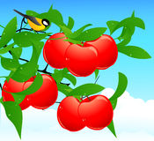 Red apple branch Stock Photos