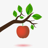 Red apple and branch Stock Image
