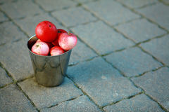 Red apple in bucket Stock Photography