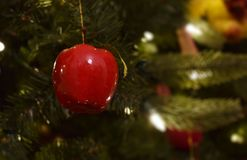 Red Christmas Apple in Christmas Tree with White Lights Royalty Free Stock Image