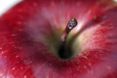 Red Apple Close-Up Stock Images