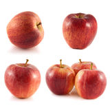 Red apple collection  on white background Stock Photo