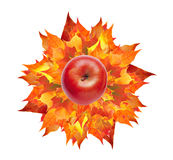 Red apple on colorful autumn maple leaves bouquet isolated on wh Stock Photography
