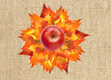 Red apple on colorful autumn maple leaves bouquet on linen. Texture Stock Image